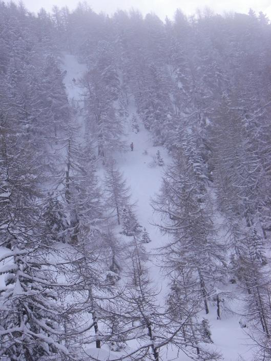 De bossen Van Champex-Le-Lac